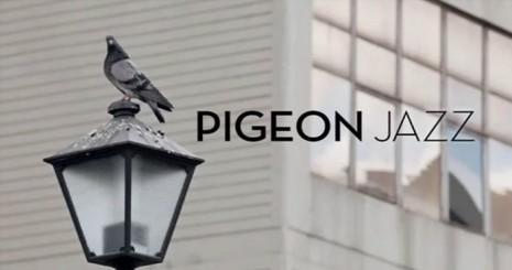 THUMB-pigeon